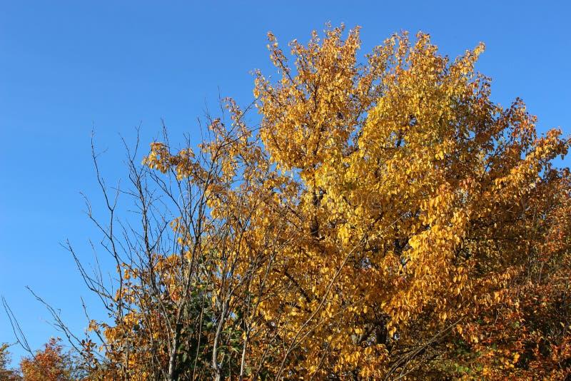 Landschaftsspitzenherbstbäume lizenzfreies stockbild