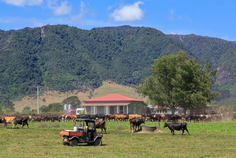 Landschaftsszene mit Herde von Kühen, Bauernhof und Quad-Bike lizenzfreie stockfotografie