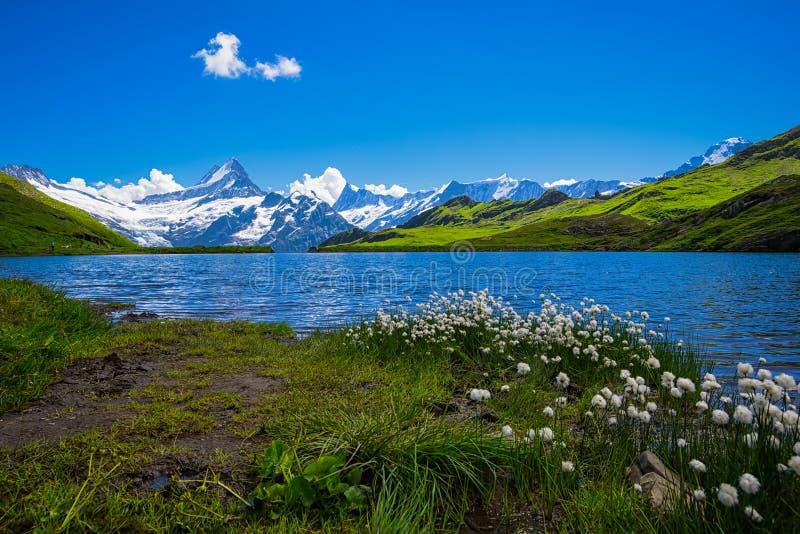 Landschaftsszene von zuerst zu Grindelwald, Bernese Oberland, Swi lizenzfreies stockfoto