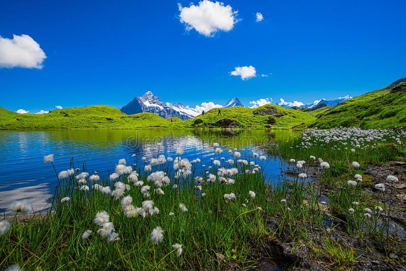 Landschaftsszene von zuerst zu Grindelwald, Bernese Oberland, Swi stockbilder