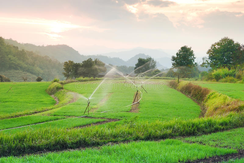 Landschaftsterrassen-Reisfeld in Chiangmai Thailand lizenzfreies stockbild
