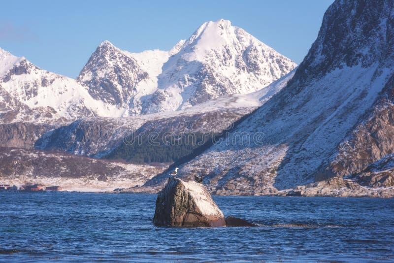 Landschaftswinterlandschaft im Norwegen, wilde Nordnatur, Lofoten-Inseln, Napp, Flakstad stockfoto