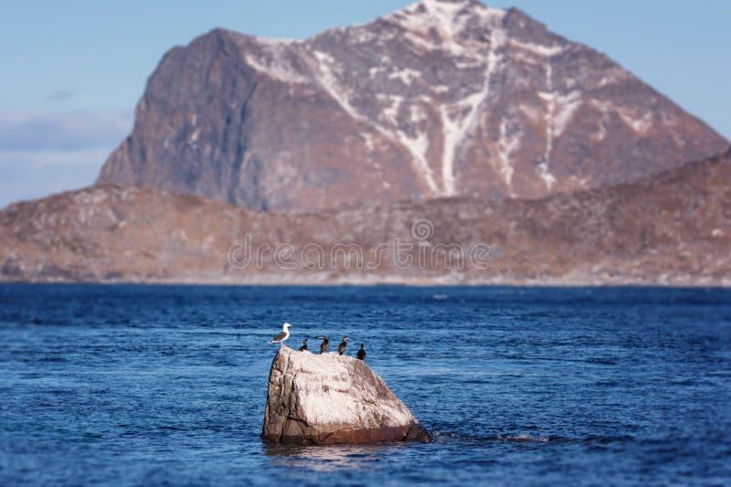 Landschaftswinterlandschaft im Norwegen, wilde Nordnatur, Lofoten-Inseln, Napp, Flakstad lizenzfreie stockfotos