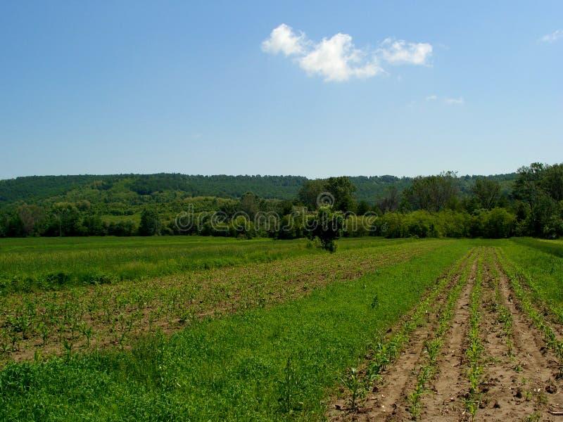 Landschap?.(1) stock foto