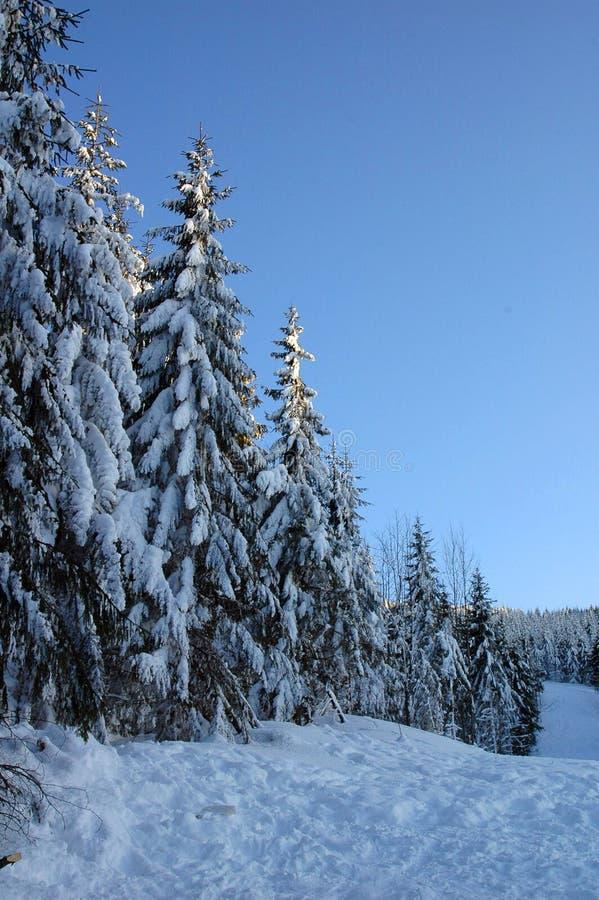 Landschap 3 van de winter stock afbeelding