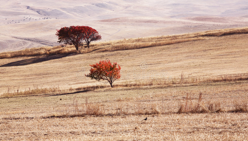 Landschap royalty-vrije stock foto