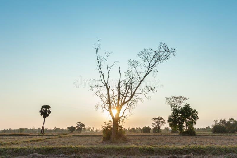 Landschap, aard, landbouw stock afbeelding