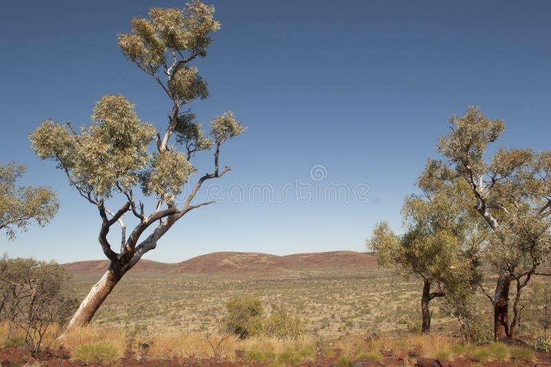 Landschap Australië in binnenland Pilbara royalty-vrije stock afbeelding