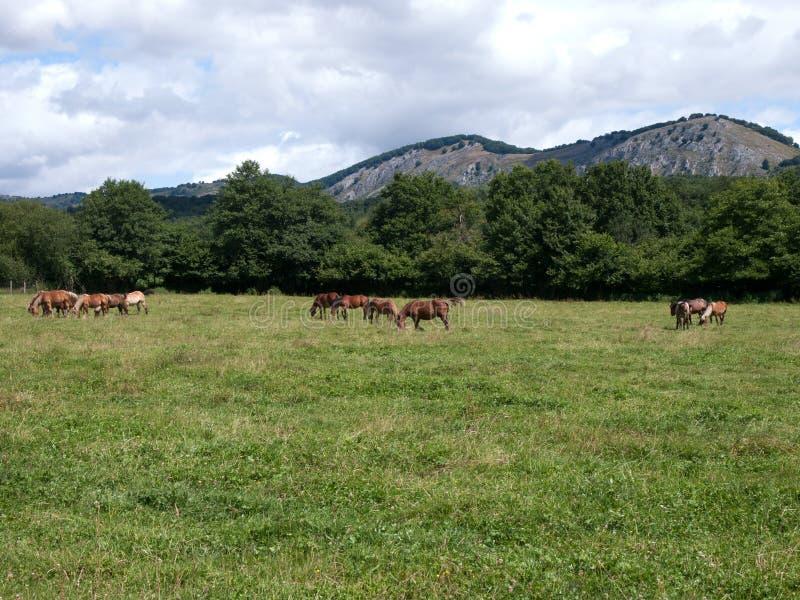 Landschap Baskisch-Navarrese met paarden in de voorgrond royalty-vrije stock fotografie