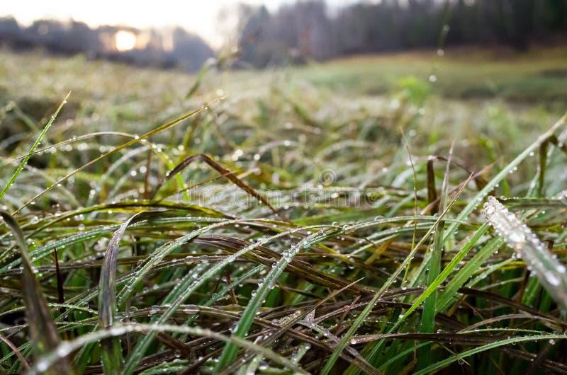 Landschap bij zonsopgang wordt gemaakt die Groen en geel die gras in dauwdalingen door de heldere het toenemen zon worden verlich royalty-vrije stock foto