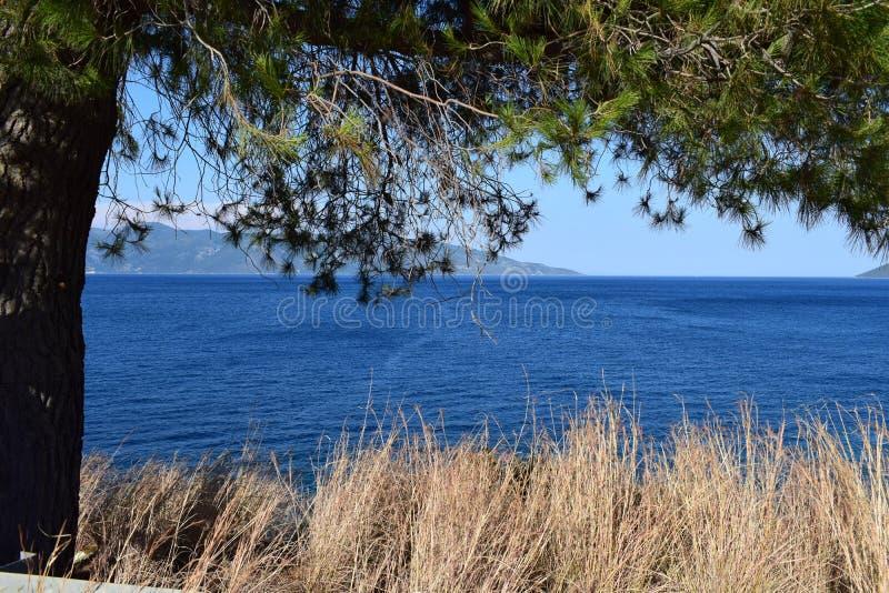 Landschap: Boom op de overzeese kust en de bergen royalty-vrije stock foto