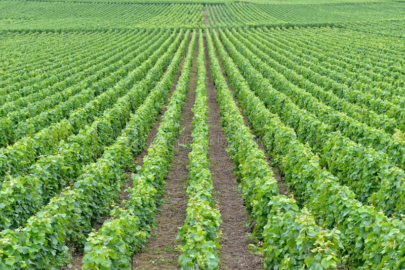 Landschap in Champagne Ardenne, Frankrijk royalty-vrije stock afbeelding