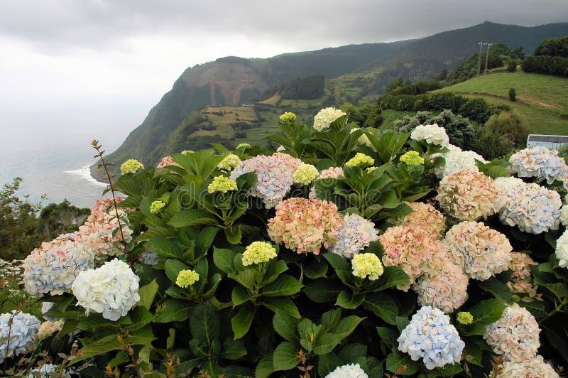 Landschap in de Azoren royalty-vrije stock fotografie