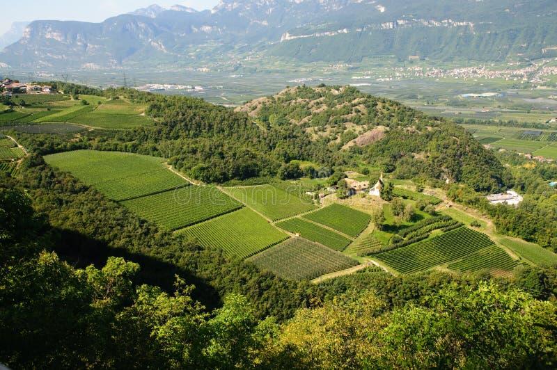 Landschap - de boom van de Wijngaard en van de appel stock afbeelding