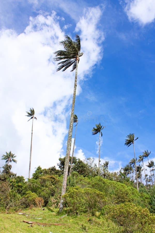 Landschap in de Cocora-Vallei met waspalm, tussen mounta stock foto's