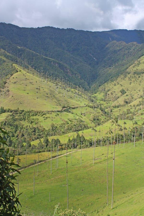 Landschap in de Cocora-Vallei met waspalm, tussen mounta stock afbeeldingen