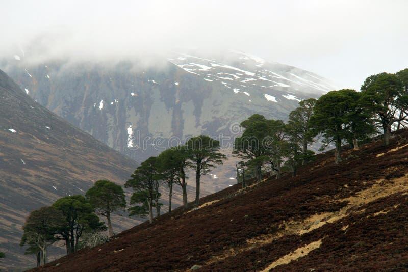 Landschap in de Hooglanden, Schotland royalty-vrije stock afbeelding