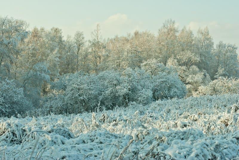 Landschap in de winter stock afbeeldingen