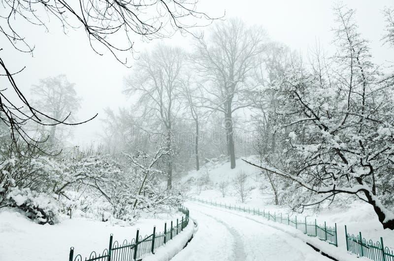 Landschap in de winterpark stock fotografie