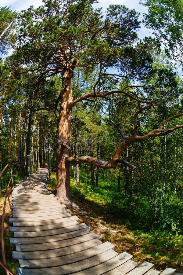 Landschap een boom, de weg, in het hout stock afbeelding