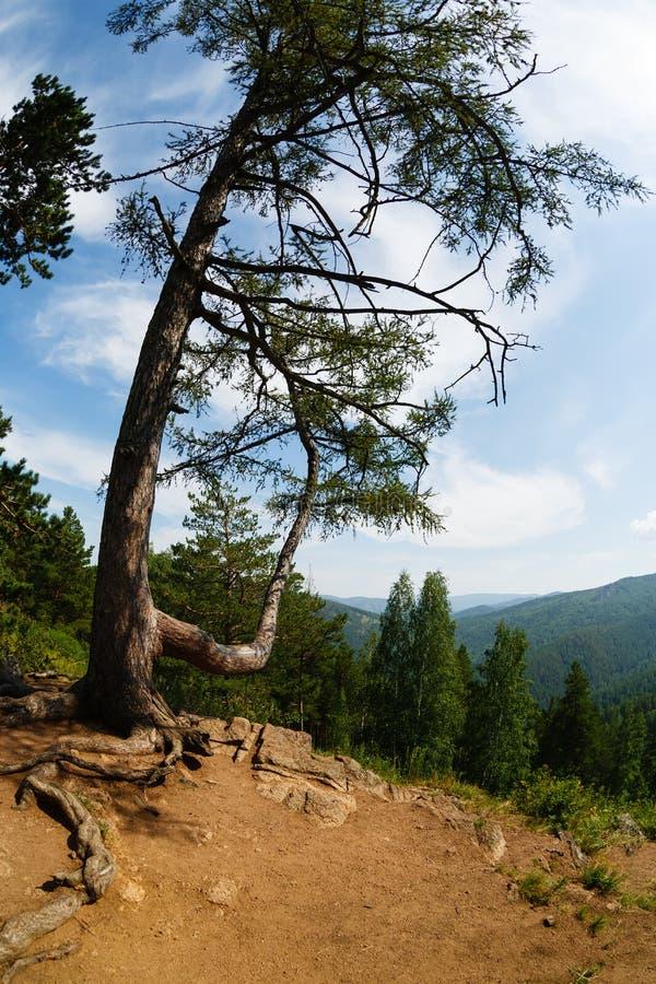 Landschap een boom tegen bergen royalty-vrije stock afbeeldingen