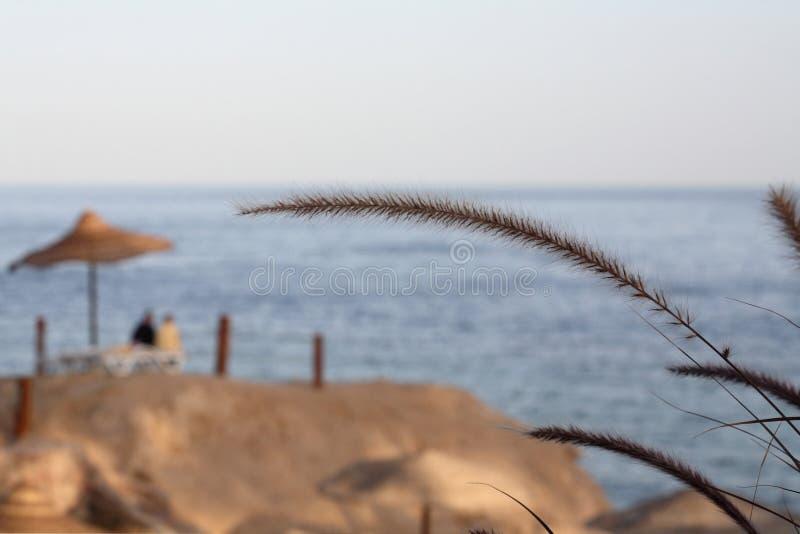 Landschap, Egypte, Sharm el Sheikh royalty-vrije stock fotografie