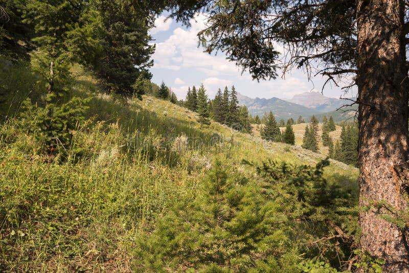 Landschap en bomen bij Forelmeer in Lamar Valley in het Nationale Park van Yellowstone royalty-vrije stock afbeeldingen