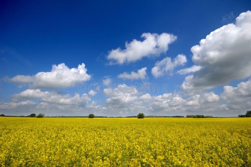 Landschap en wolken stock fotografie