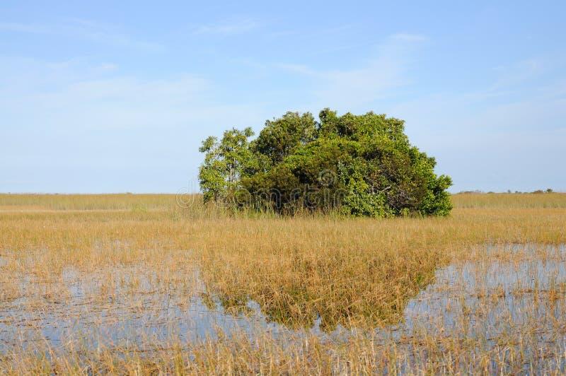 Landschap in Everglades, Florida stock fotografie