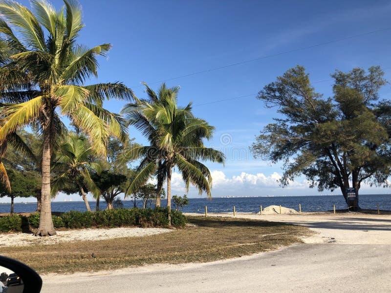 Landschap in Florida stock afbeelding