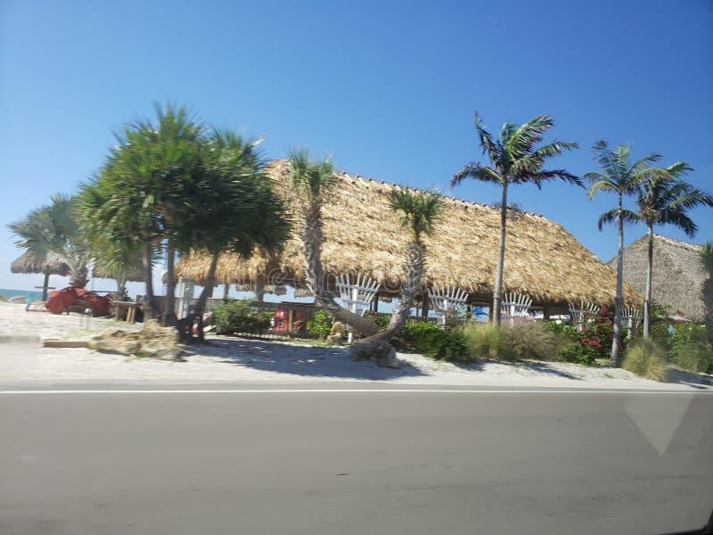 Landschap Florida Beach Roadside Palmtree royalty-vrije stock foto's
