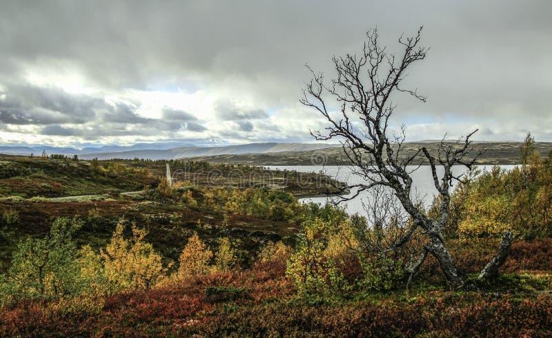 Landschap in het nationale park van Forollhogna, Noorwegen royalty-vrije stock afbeeldingen