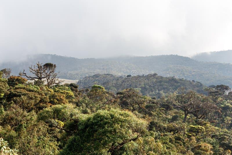 Landschap in Horton Plains National Park, Sri Lanka royalty-vrije stock fotografie