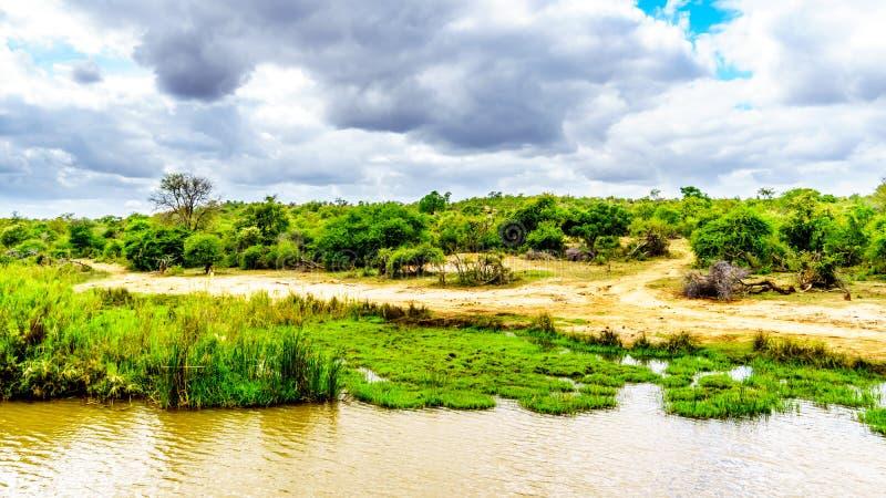 Landschap langs de Olifants-Rivier dichtbij het Nationale Park van Kruger in Zuid-Afrika royalty-vrije stock afbeeldingen