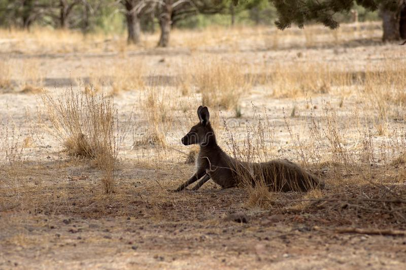 Landschap langs de Toneelaandrijving van Moralana, de Waaiers van Flinders, SA, Australië stock fotografie