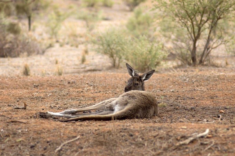 Landschap langs de Toneelaandrijving van Moralana, de Waaiers van Flinders, SA, Australië stock foto