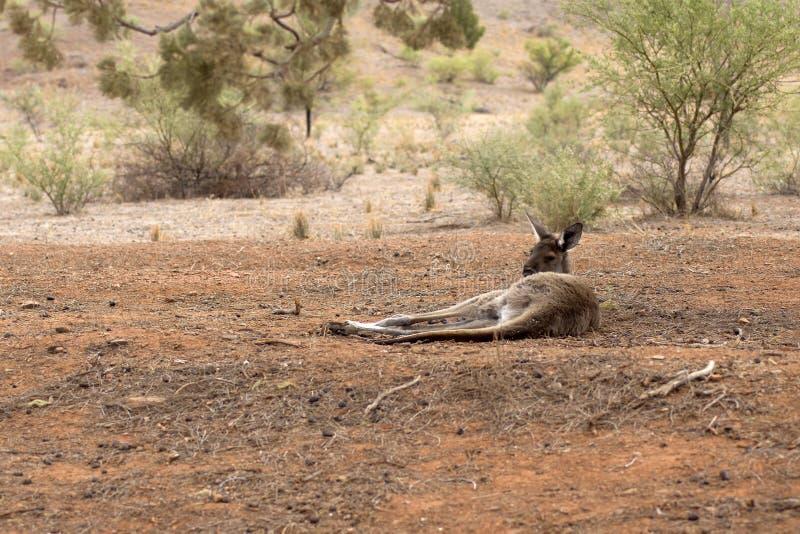 Landschap langs de Toneelaandrijving van Moralana, de Waaiers van Flinders, SA, Australië stock afbeeldingen
