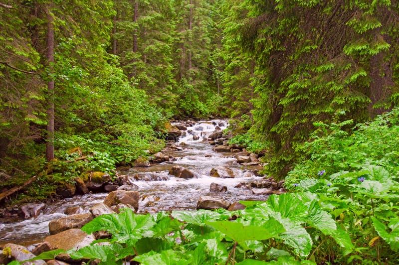Landschap met bergen, bos en een rivier stock afbeeldingen
