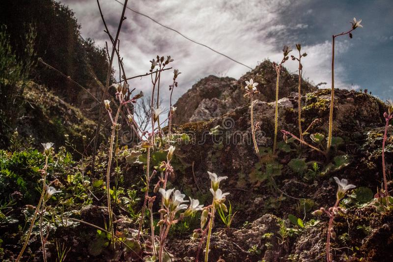 Landschap met bergen en kleine witte bloemen stock foto's