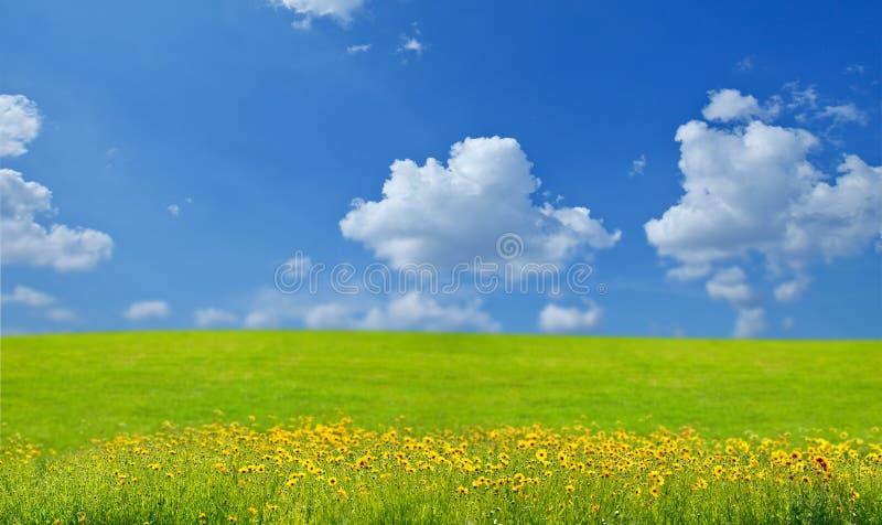 Landschap met bloemen stock foto's