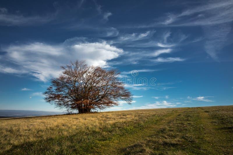 Landschap met boom royalty-vrije stock afbeelding