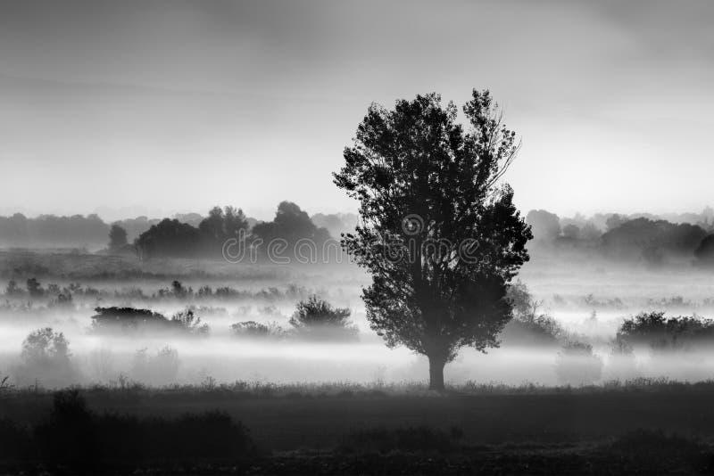 Landschap met boom in de mist op het gebied van Koroneia-meer royalty-vrije stock afbeeldingen