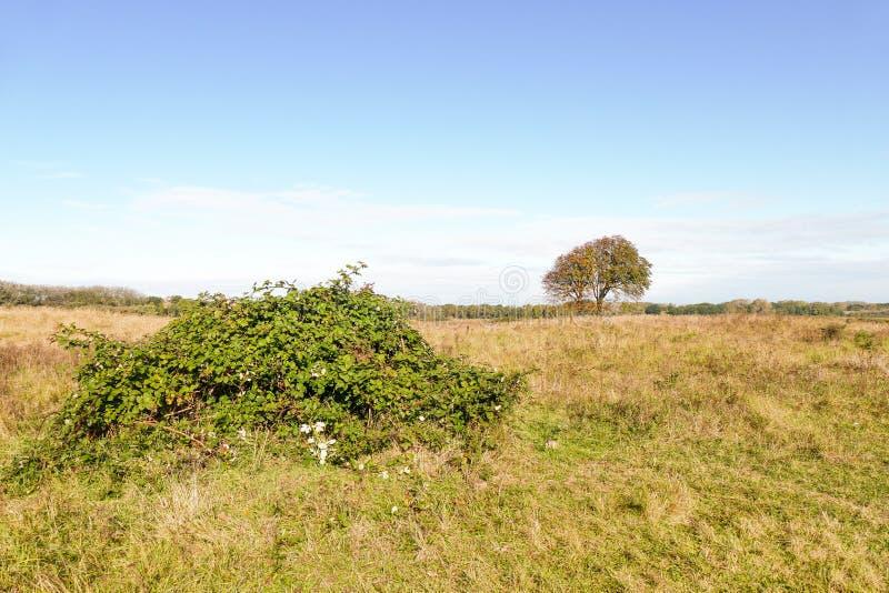 Landschap met braambes royalty-vrije stock afbeelding