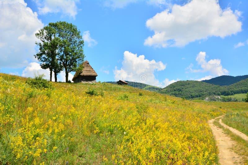 Landschap met buitenhuis, gebied van bloemen en hemel. stock afbeeldingen