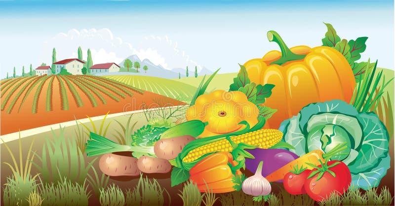 Landschap met een groep groenten royalty-vrije illustratie