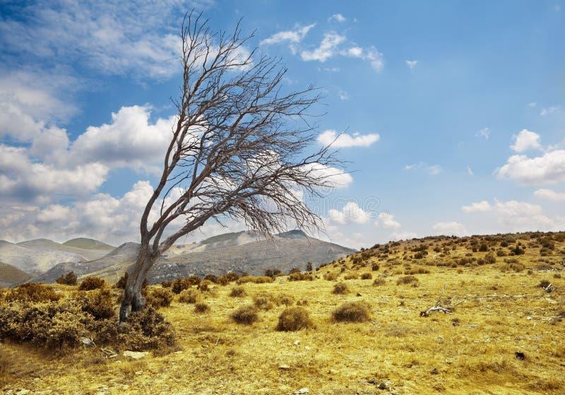 Landschap met eenzame droge boom stock foto