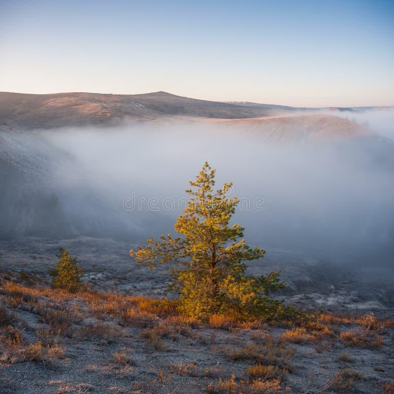 Landschap met eenzame pijnboom stock afbeelding