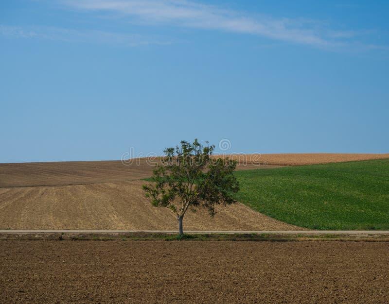 Landschap met enige boom royalty-vrije stock foto's