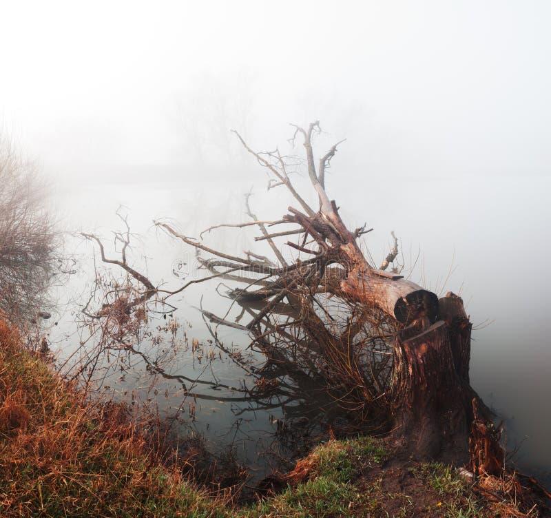 Landschap met gehakte boom royalty-vrije stock fotografie