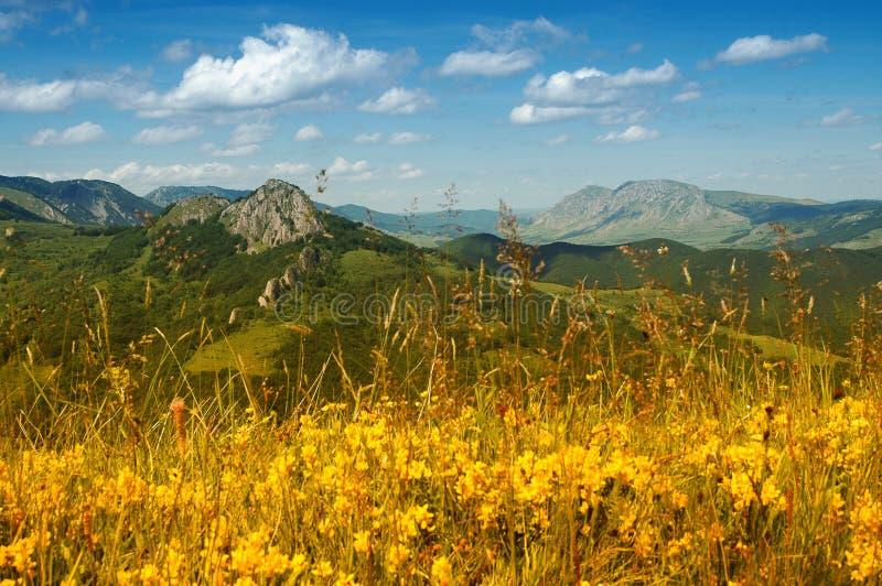 Landschap met gele bloemen en blauwe hemel royalty-vrije stock afbeeldingen